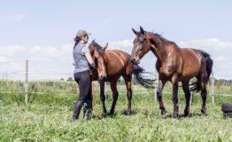 Konie 33