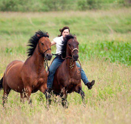 Amidora-Horsemanship-mb
