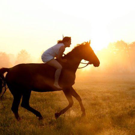 moje-konie-szkolenia