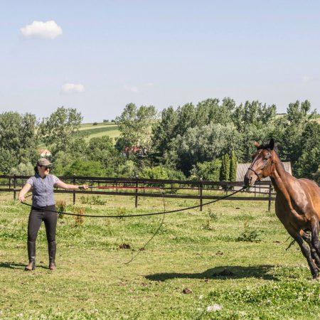 Praca z końmi