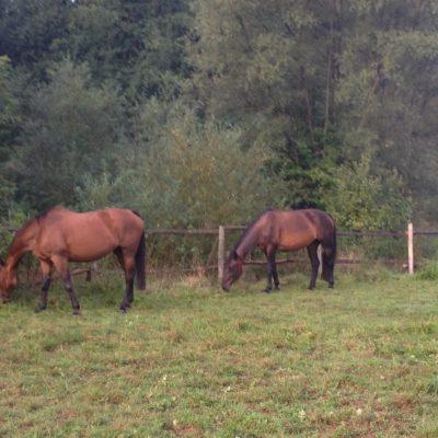 moje-konie-ah-instruktor-2