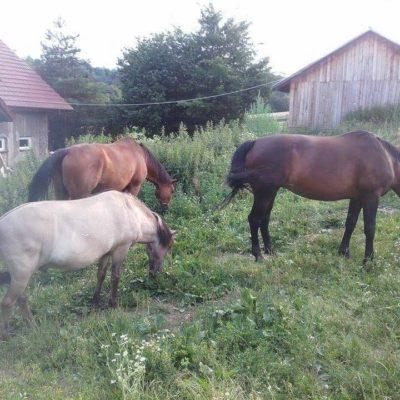 moje-konie-ah-instruktor