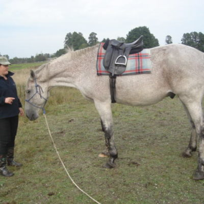 Horsemanship-workshops-1