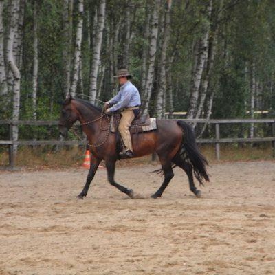 my-horses-9