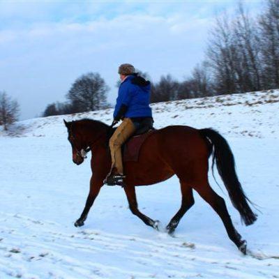 my-horses-2