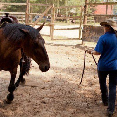 moje-konie-5