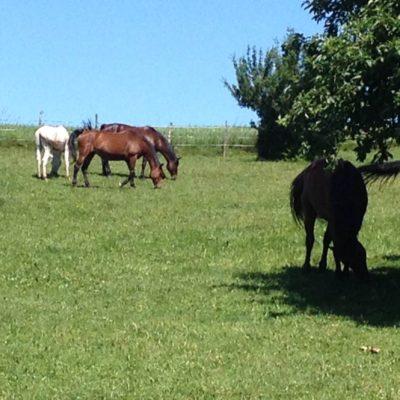 moje-konie-my-horses