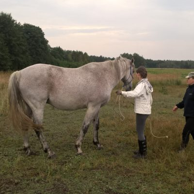 Horsemanship-workshops-poland