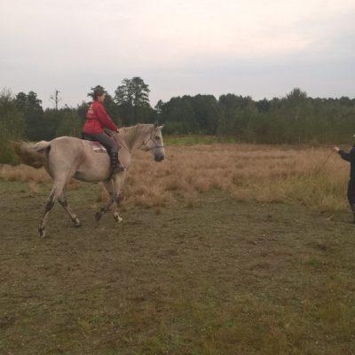 wokshops-with-horses